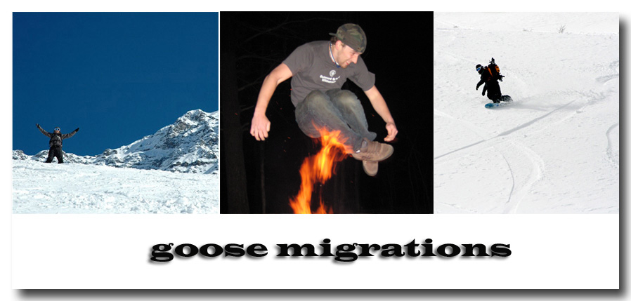 goose travels